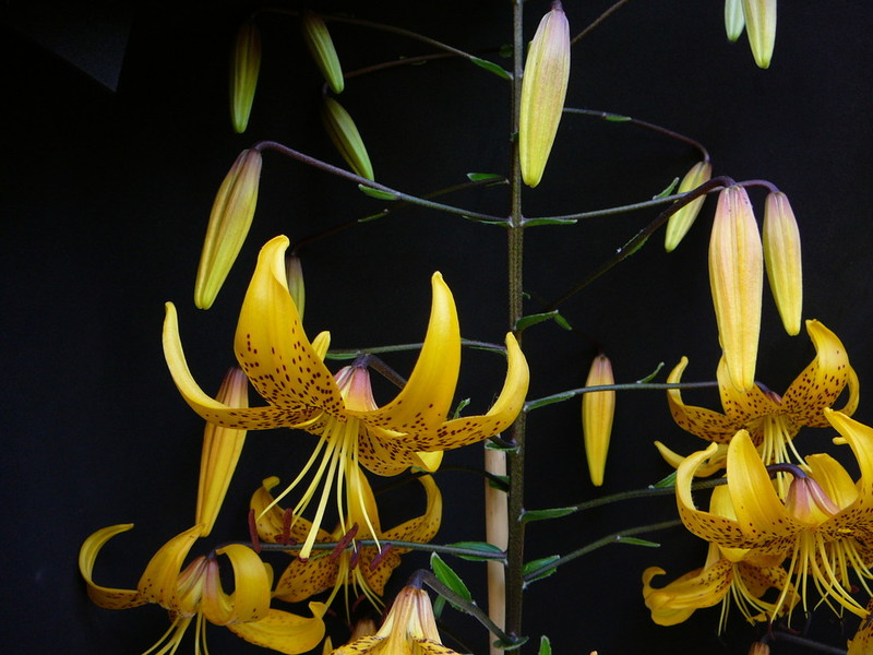 Willkommen auf meiner Homepage orchideen-moorpflanzen.de - Blumen
